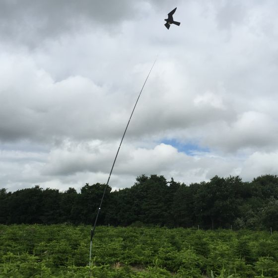 Hawk bird scarer with 7 meter telescopic pole with mounting tube, 22 m/s wind.
