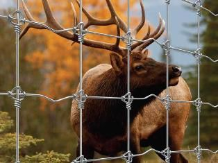 Wildlife fence 200/17/15 STAY LOCK / TIGHTLOCK (100m)